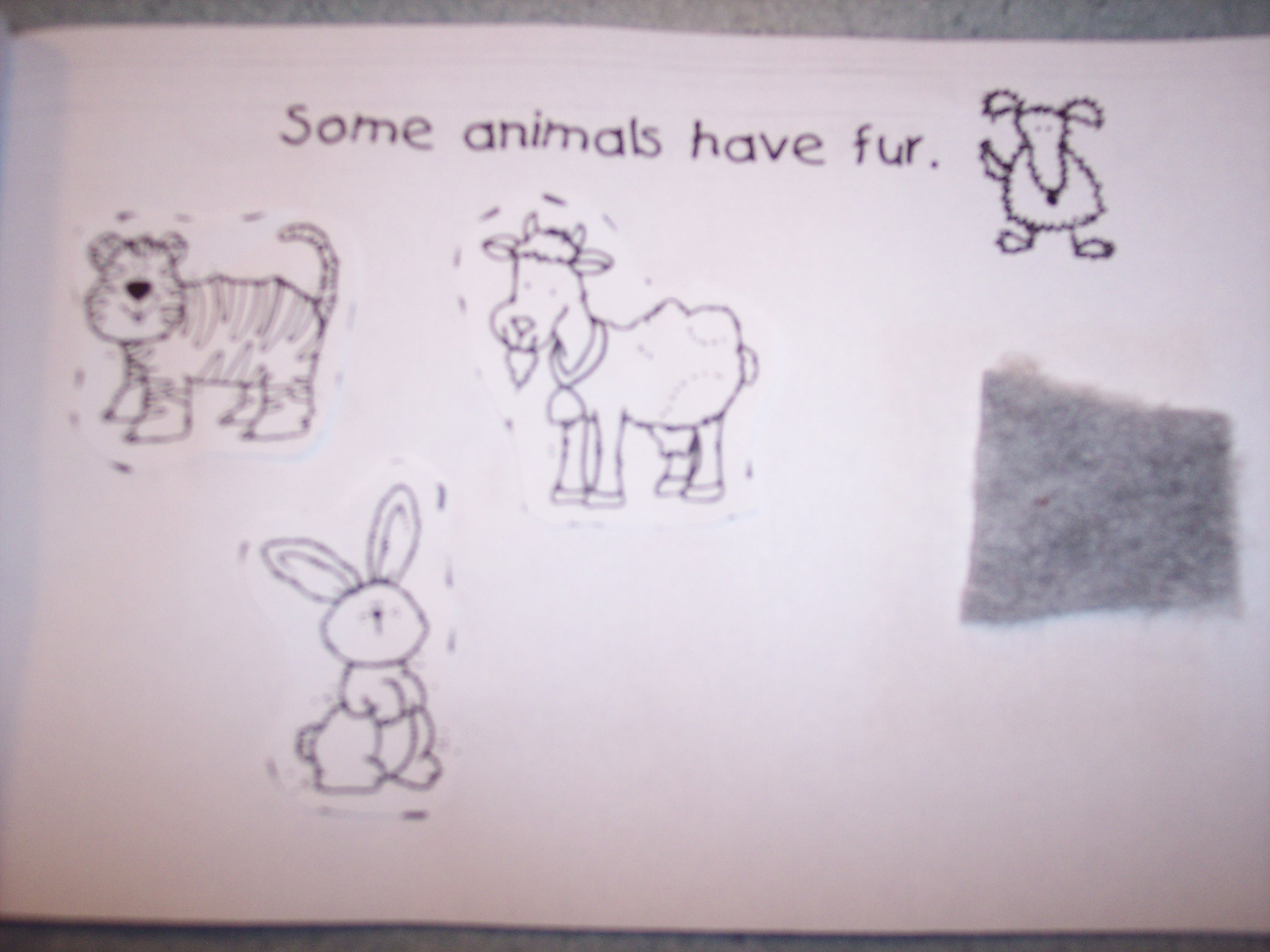 Fur Feathers Scales Worksheet Kindergarten Fur Best Free