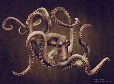 octopus front render