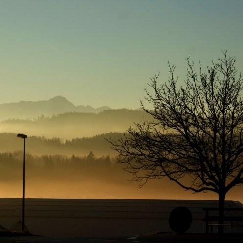 15.01.2014, Morgensonne in Züberwangen mit Säntis