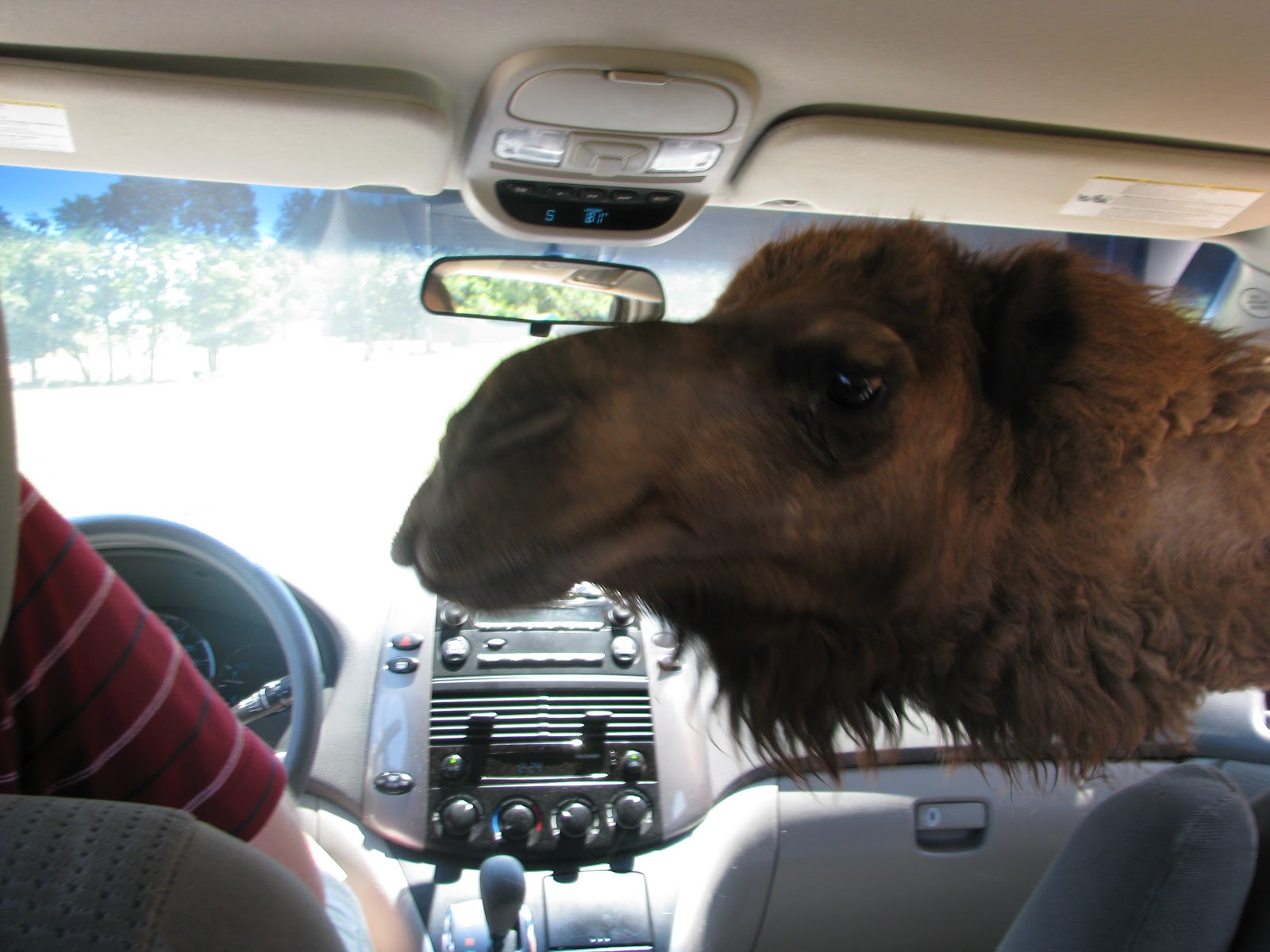 Need a Day Trip? You Can STILL Visit the Virginia Safari Park This Fall