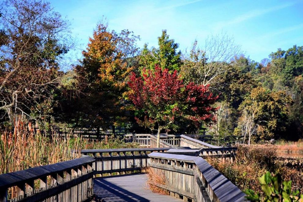 Adventures in DC: Visit Kenilworth Park and Aquatic Gardens — for FREE