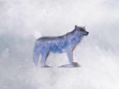 12x9_wolfcomp