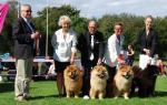 Chow Chow Kennel Piuk Chow BIS Bornholm 2016