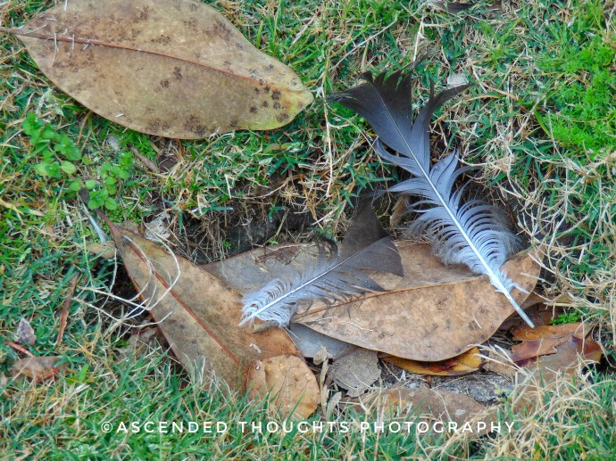 Old things fall away