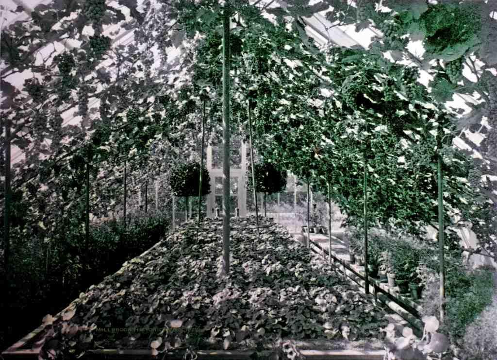 "Grapevines at the Wing estate ""Sanandonan"""