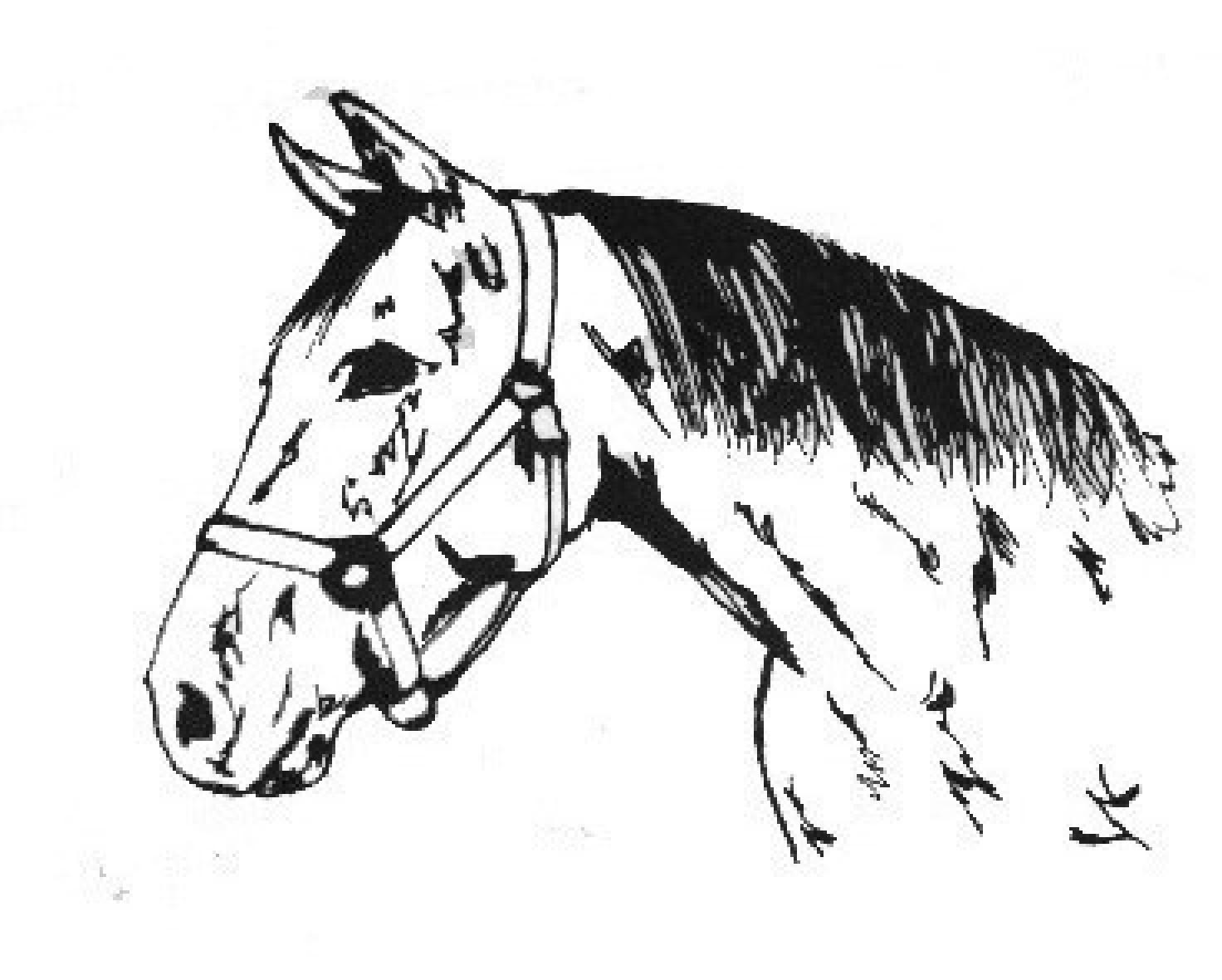 D C K Quarter Horses