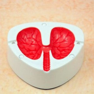 lungs ashtray