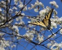Butterfly best 8x10