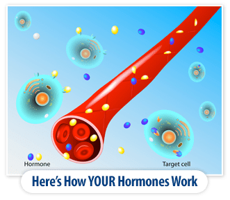 How Hormones Work