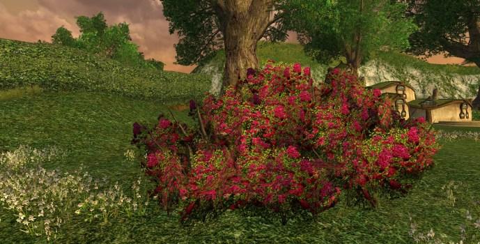 Grand Buisson de Roses Rouges d'Imloth Melui