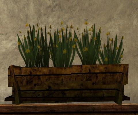 Grand Bac d'Iris (Large Box of Gladdens)