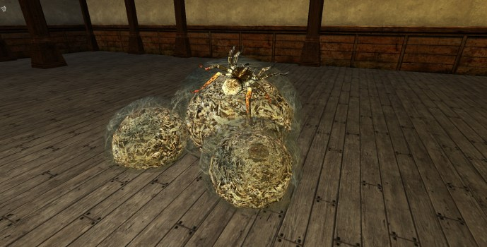 Sacs d'œufs d'Araignée