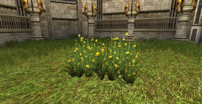 Massif d'Iris sauvages en Fleur