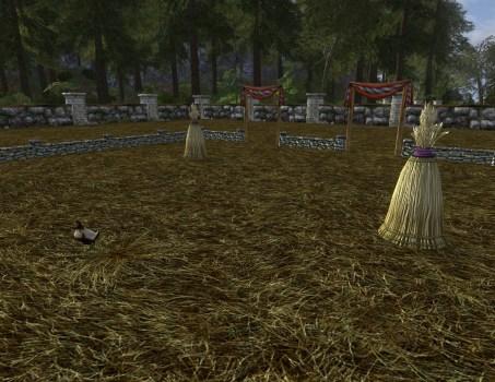 Grand terrain de chasse-poulet avec poulet belliqueux
