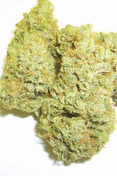 Albino Fire Skunk OG (Pineapple Skunk x (White Fire OG # 3 X Snowlotus)) 12 Regular Seeds