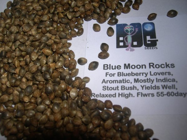 Blue Moon Rocks (Blue Moon x BOG Bubble) 13 Regular Seeds