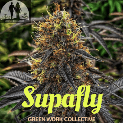 Supafly (Super Silver Haze x F5 Flo) 7 Regular Seeds