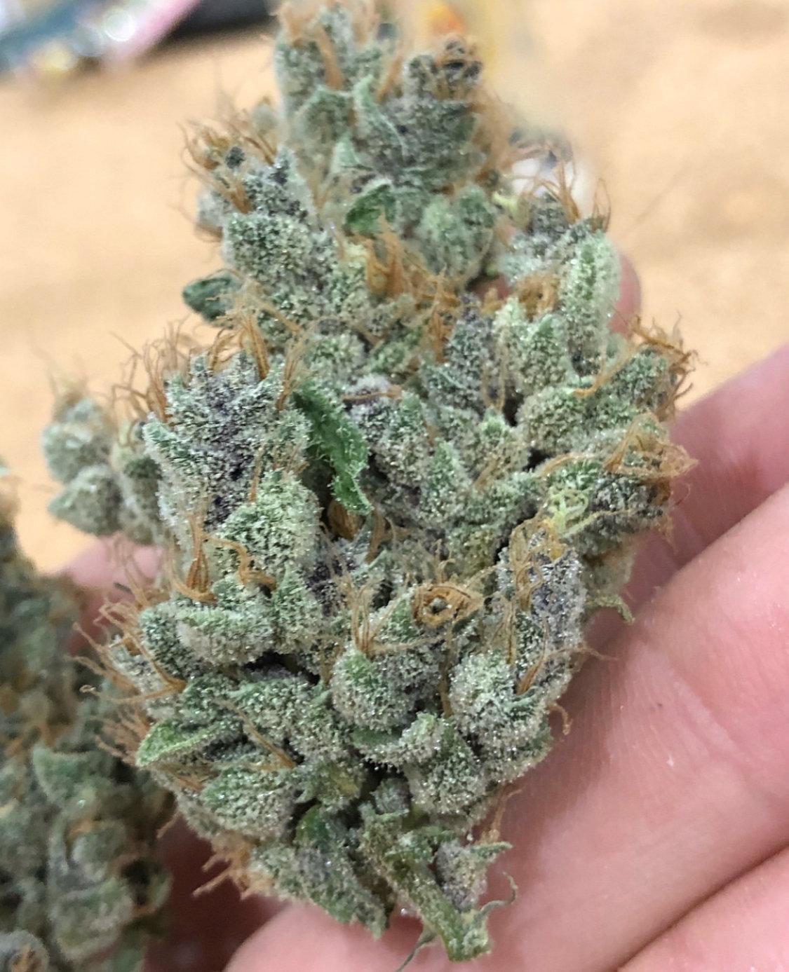 TropSanto (GMO x Tropicanna Cookies) 12 Regular Seeds