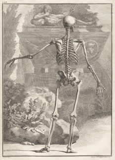 Skeleton-Image-01-by-Jan-Wandelaar-1690-1759-from-Bernhard-Siegfried-Albinus-Tabulae-sceleti-circa-1749