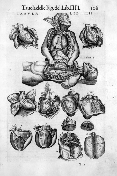 Valverde_heart_lungs