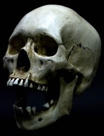 skulls (4)