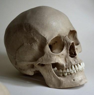 skulls (7)