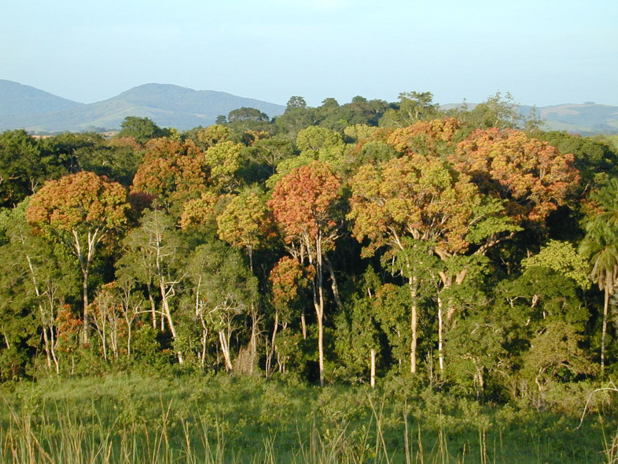 largest Forest in Africa