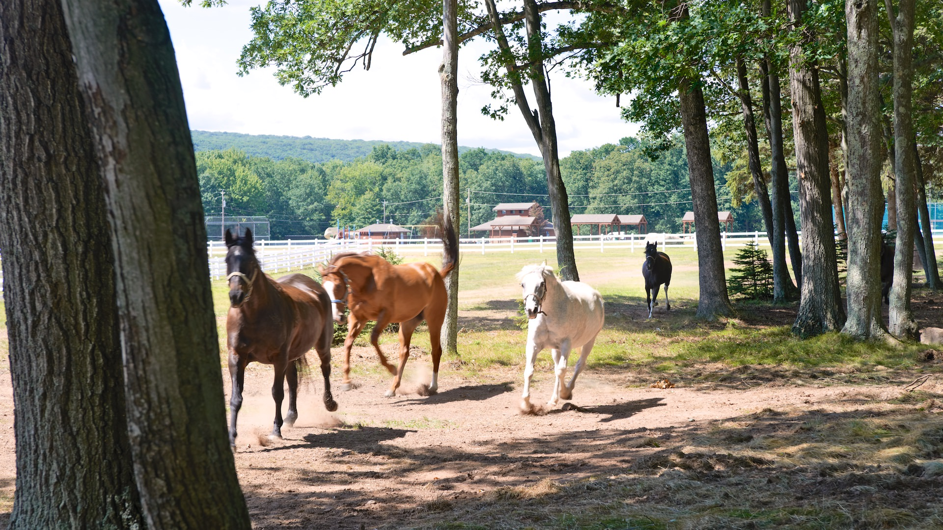Photo of horses at Eagle Rock