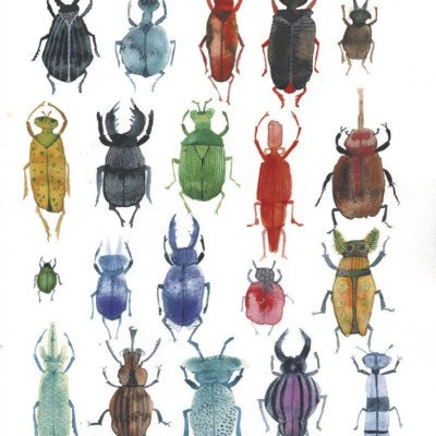 bugs illustration janneke ipenburg