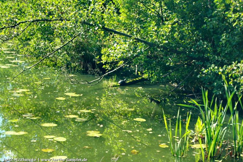 Eine Schildkröte in freier, purer Natur!
