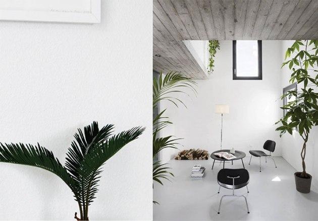 Nature-infused-interiors-indoor-plants-shopping-DeSmitten