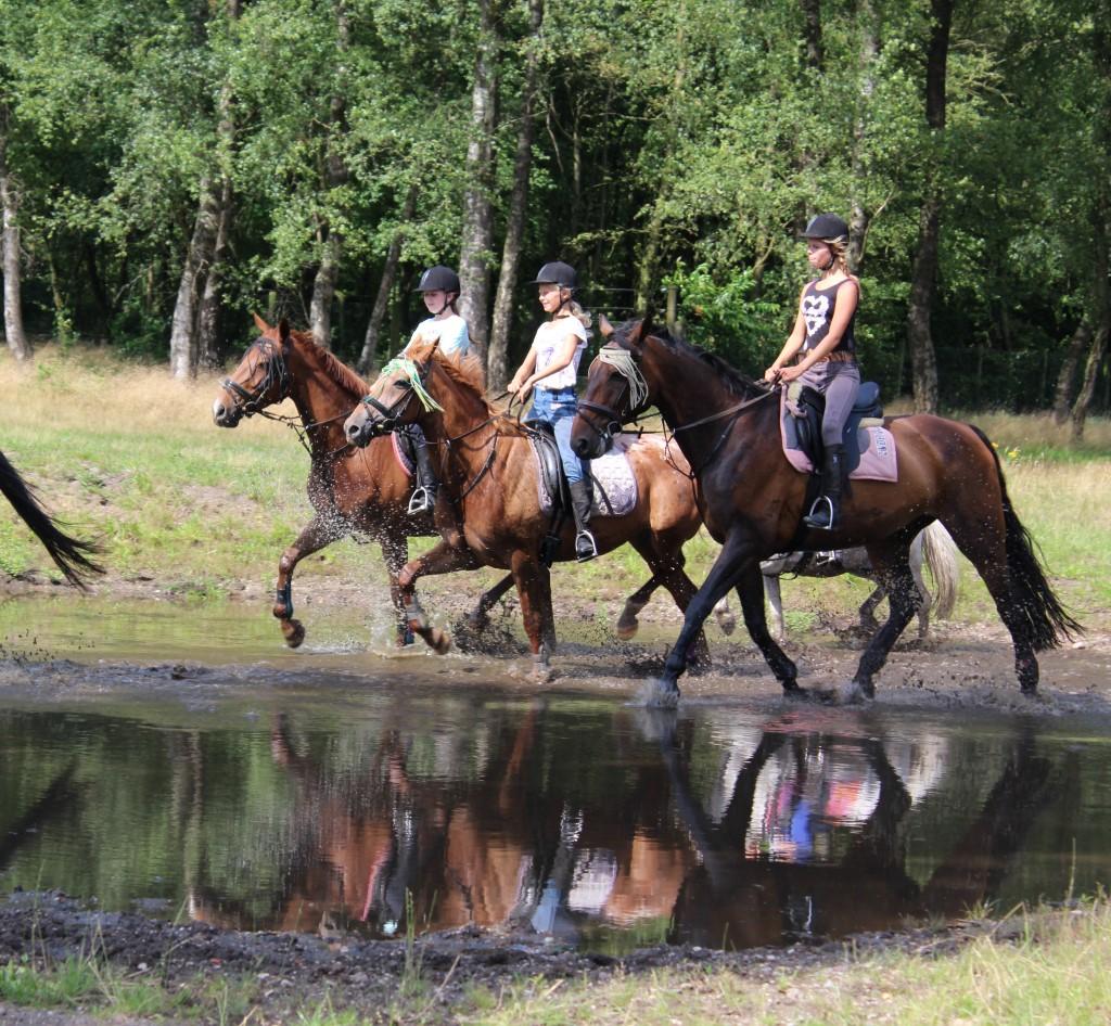 ponykamp op de veluwe