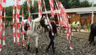 Ponykamp 2017 week2 Manege de Woelige Stal Ede
