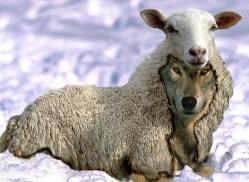 Schaf im Wolfspelz