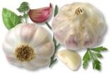 Knoblauch und Haut: Pilze, Dermatitis, und Juckreiz