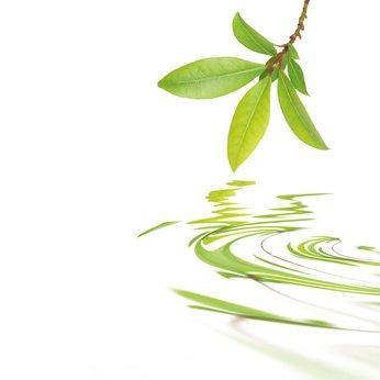 Die Gemeinschaft fördert die Entwicklung der ökologischen Landwirtschaft