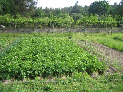 Wachsende ökologische Landwirtschaft in Murcia