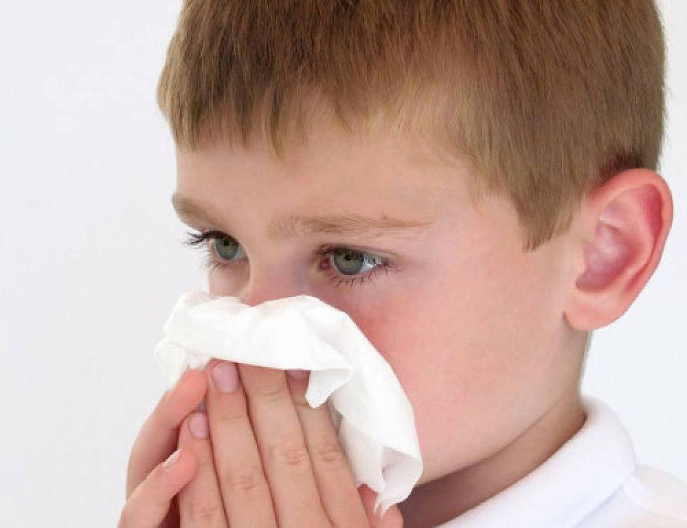 Allergie gegen Katzen, Pollen, Staub, etc.: Wie kann man sie entfernen