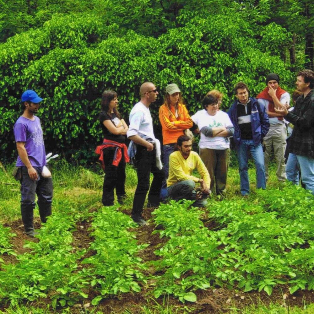 Der ökologische Landbau ist stagniert in Valencia