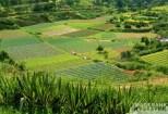 Die ökologische Landwirtschaft in Spanien. Der strategische Plan