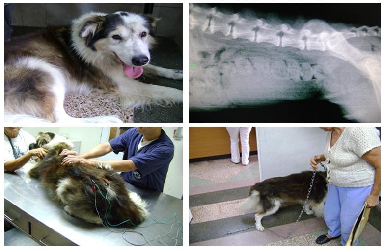 Chinesische Medizin zur Behandlung von Haustieren