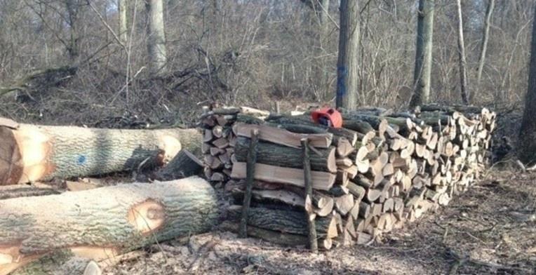 bois de chauffage a marles en brie