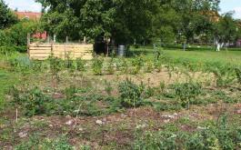 Beerenplantage