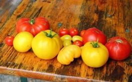 Viele verschiedene Tomaten