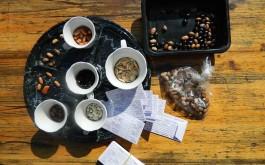 Solidares Tauschen von Samen, Zwiebeln und Knollen...