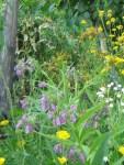 grosser Beinwell im Permakultur-Garten