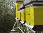 Bienen produzieren das Wachs zu Bienenwachs Tuch Pausenbrot