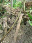 Kostenlos Garten gestalten DIY Flechten - Der einfache Weg die ersten Flechtreihen