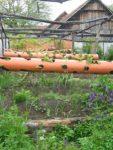 Erdbeeren Schneckenfrei - Die garantiert sicherste Lösung fliegende Ardbeerblueten