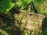 Kostenlos Garten gestalten DIY Flechten - Der einfache Weg Flechtwand nach Tagen